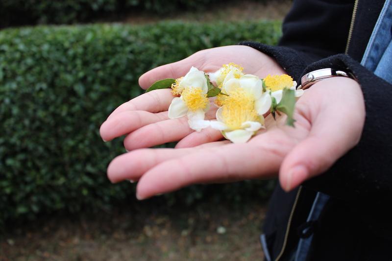 """Akcija """"Pokloni cvijet"""""""