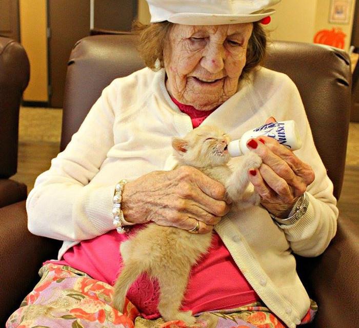 Mačići u domu za stare